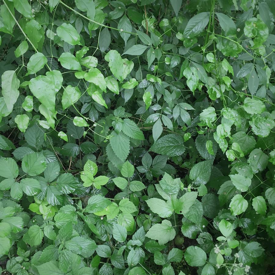 Tröstliches Grün